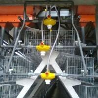 Kandang Baterai Ayam Petelur 6 Pintu