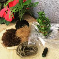Paket DIY Kokedama by Kenzbiz