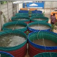terpal kolam bulat bahan semi karet 0,90 diameter 1,5x1,20