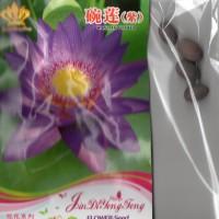 (4 Biji) Bunga Teratai Ungu (B0195)