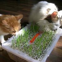 Great Health Food Foor Cats/makanan sehat untuk