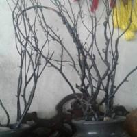 pot granit plus akar bahar kayu uli