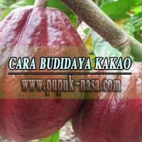 Paket Pupuk Organik Budidaya Tanaman Kakao