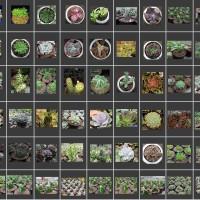 Paket Succulent (Sukulen) dan Kaktus 100 Tanaman