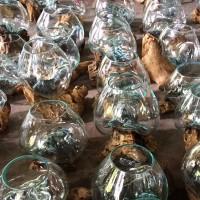 aquarium kaca akar kayu bali medium