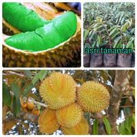 bibit durian montong hijau