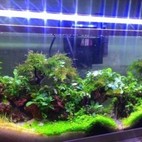 LAMPU LED YAMANO P600 tuk aquarium 50-60 cm LED Duduk 10000 kelvin