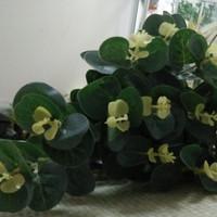 daun dolar pajangan ruang tamu bunga plastik