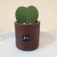 Cactus Hoya Love Stone Vase kaktus dalam pot kecil cantik