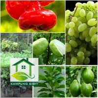 Bibit buah beli paket dpt 4 tanaman
