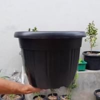 pot bunga plastik hitam GRACE 35cm kuping