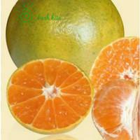 Buah jeruk pontianak fresh per 1kg