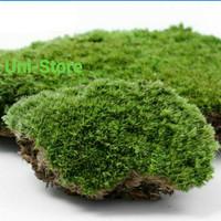 LUMUT HIDUP / FOREST MOSS Cover Bonsai Dsb