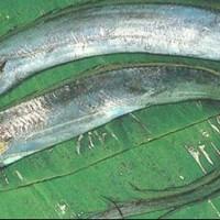 ikan layur per 500gram