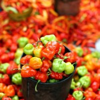 Bibit / Benih / Seed Cabe Katokkon Mudah Tumbuh Hot Pepper