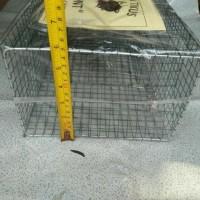 perangkap tikus masal tanggung