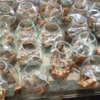 pengerajin aquarium ikan kaca tiup akar kayu bali small