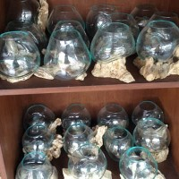 aquarium akar kayu bali kecil