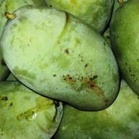 buah mangga gadung