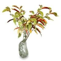 Jual 2 Bibit Bunga Sambang Darah Dan Obat Herbal bibit / biji / benih