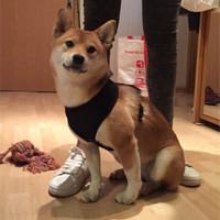 Rompi Anjing Baju Anjing Pakaian Anjing