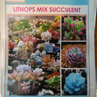 benih / bibit Lithops mix succulent (MHS)