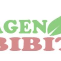 PROMO 5 Bibit Pohon Daun Sirih Merah - Tanaman Herbal