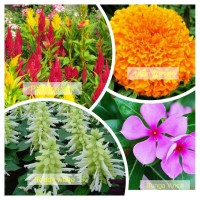 Paket hemat benih bunga mix color bonus pupuk NPK