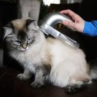Pembersih Bulu Hewan Peliharaan Vacuum Bulu Anjing Kucing Elektrik