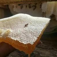 Madu sarang 1 kg raw honey premium dari herbal ruqyah