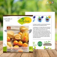 Benih Bibit Ciplukan Kuning Ground Cherry Haira Seed