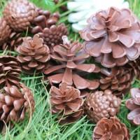 XMPN pinus plastik pajangan hiasan kue pohon natal dekorasi ornamen