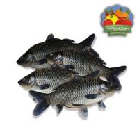 Ikan Mas Segar - 500 gram