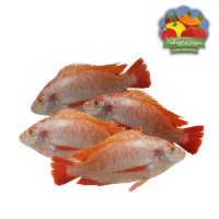 Ikan Nila Merah Segar - 500 gram