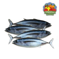Ikan Tongkol Segar - Per Ekor ( 500 gram )