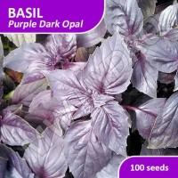 100 Seed - Benih Basil Purple Dark Opal Import Jaminan Kualitas