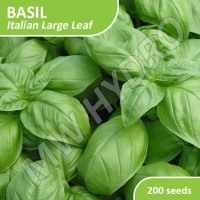 200 Seed - Benih Basil Italian Large Leaf Import Jaminan Kualitas