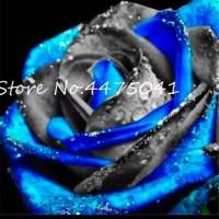 Jual Biji benih bunga mawar rose rainbow 15 Berkualitas