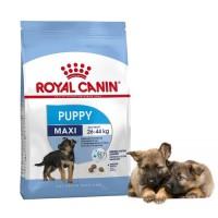 Dogfood Royal Canin Maxi HOT SALE Junior 15kg