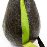 mur4h bibit tanaman buah alpukat hass australia