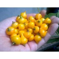 Bibit Benih Biji Cabe Hias Kuning Yellow Chupetinho Pepper Biquinho