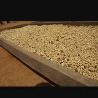 kopi biji robusta petik merah natural Curup Bengkulu