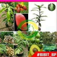 4 Paket tanaman bibit buah