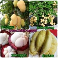 pake 4 macam bibit buah unggul kelengkeng-durian-manggis-mangga