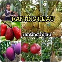 paket 6 jenis bibit buah durian Montong-mangga mahatir-irwin-jamb