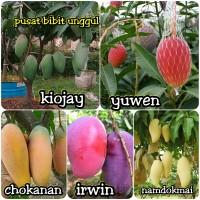 promo 5 bibit tanaman buah mangga-yuwen- kiojay-namdokmai-chokana