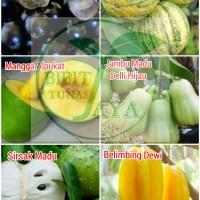 promo 6 bibit buah anggur brazil jambu kristal varigatha mangga a
