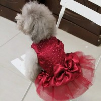 Baju Anjing Kucing model pesta dengan pita lace