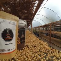 bubuk kopi robusta