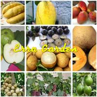 Paket bibit tanaman buah tabulampot
